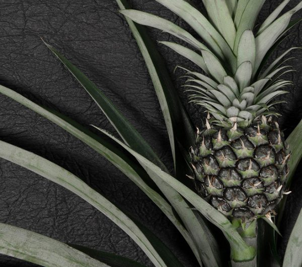 Pinatex is a leather made out of pineapple leaves which is invented by Ananas Anam. The photograph shows the fruit and leather